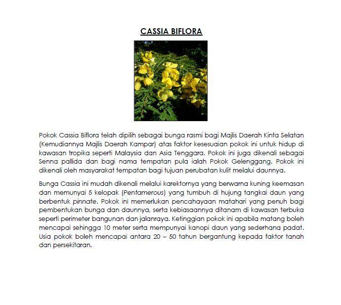 cassia biflora no sign